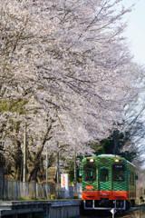 春が到着しました。