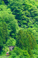山深く、緑深く