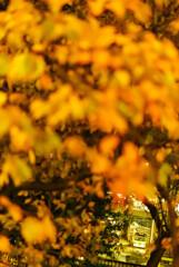 Autumn hole