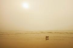 霧に海とあめ