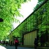 新緑の弥生講堂