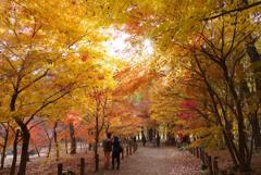 晩秋の平林寺