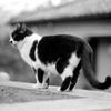 Mono Cat