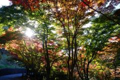 織姫公園の紅葉(1)