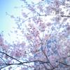 エアリー桜