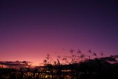 夕暮れ時@江戸川沿い(1)