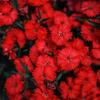 花壇...1