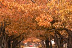 秋の公園...2