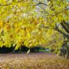 秋色...1