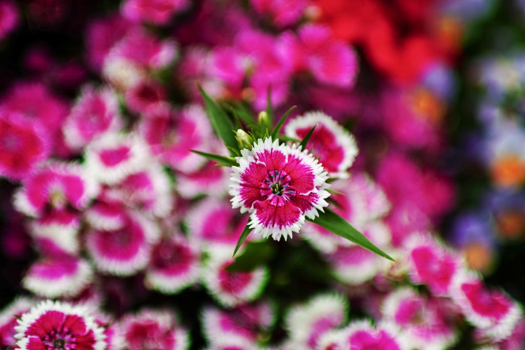 花壇...2