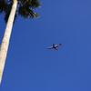 ヤシと飛行機...2