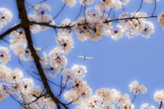 airplane...2