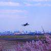 花見と飛行機