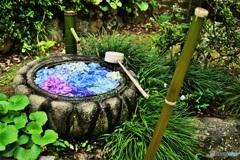紫陽花手水
