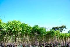 岡崎公園⑤