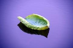 蓮の葉 小さなおじさんの船