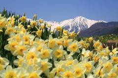 春待つ宝剣岳