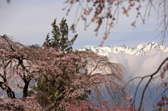 春を待つ宝剣岳