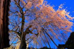 黄昏時の林陽寺