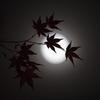 秋の月夜の下で
