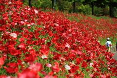 緑と赤の散歩道