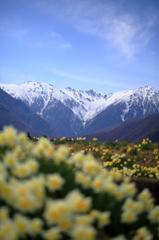 春を待ちわびる千畳敷