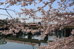 春の通勤列車