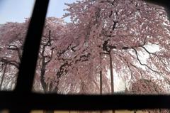 学窓から春