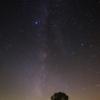 コナラと夜空