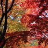 秋色アーケード