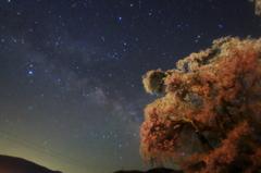 勝間の夜桜