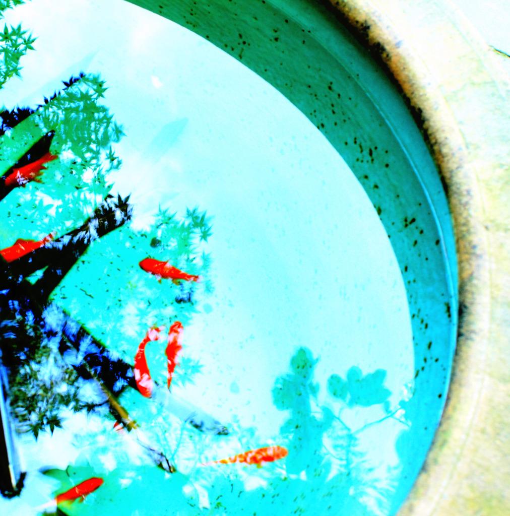 夏金魚 By Mikechan Id 1251857 写真共有サイト Photohito