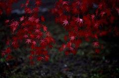 小原村の紅葉