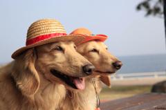 麦わら犬海賊団