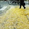 御堂筋の秋