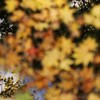秋の向こう側