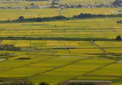 収穫期の只見線