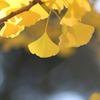 秋の象徴(^。^) 其の七