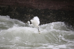 厦門旅行記 其の1・・・捕食する白鷺