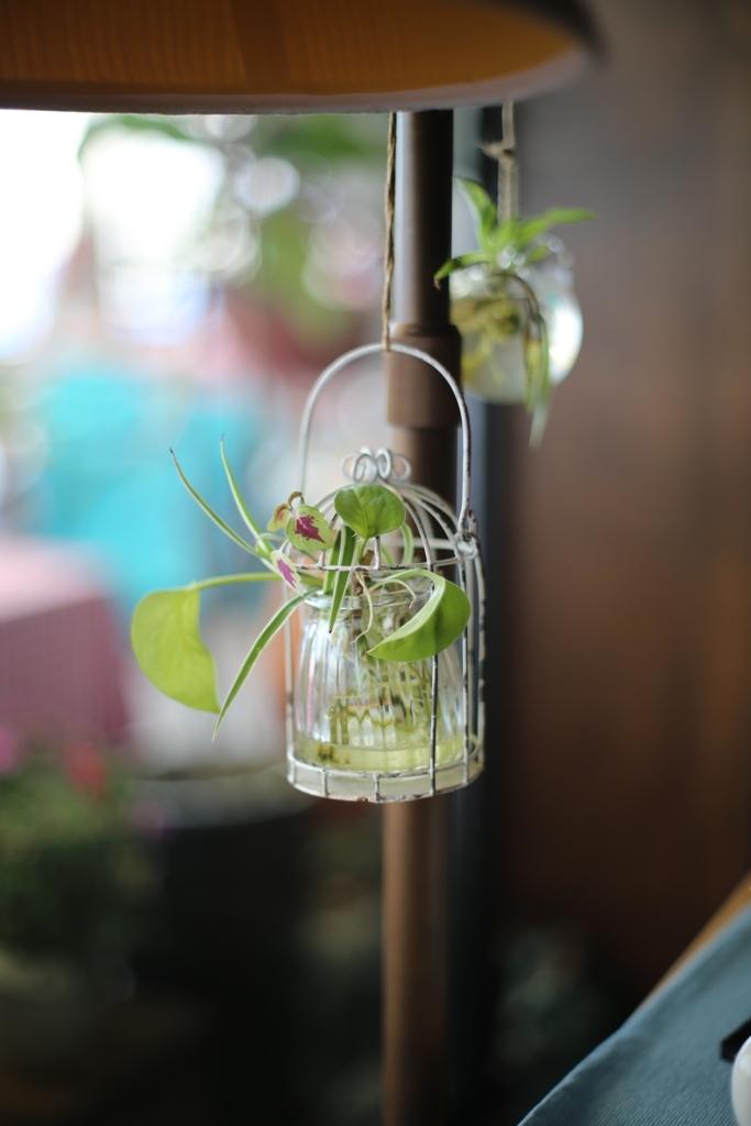 観葉植物(^。^)