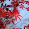 秋の気配 其の3