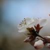 春が来た vol.1