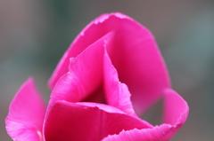 君はバラより美しい!!