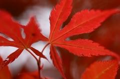 季節はずれの紅葉 Vol.1