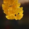 秋の象徴(^。^) 其の二