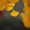 秋の象徴(^。^)