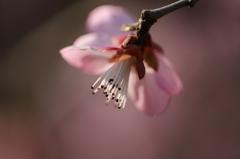 春が来た vol.3