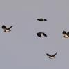 1814tm この鳥は何かわかりません
