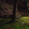 苔の生す地