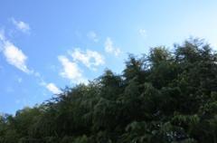 風が強くて木の枝が右左ゆっさゆっさと揺れてたなびく